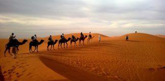 Diferencia entre camello y dromedario