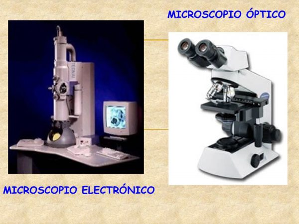 ⊛▷Diferencias entre microscopio óptico y electrónico | Diferencias ...