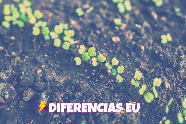Diferencias entre compuestos orgánicos e inorgánicos